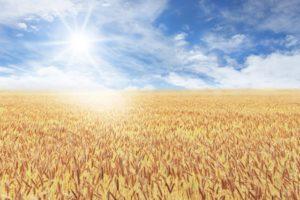 穀物|企業速報 証券市場新聞